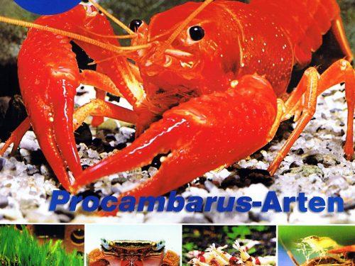 Garnalen, krabben en kreeften