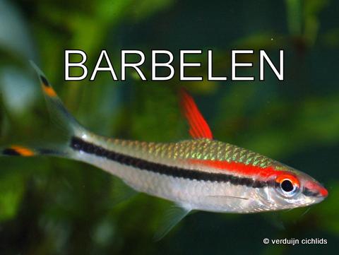 Barbelen, danio's etc.
