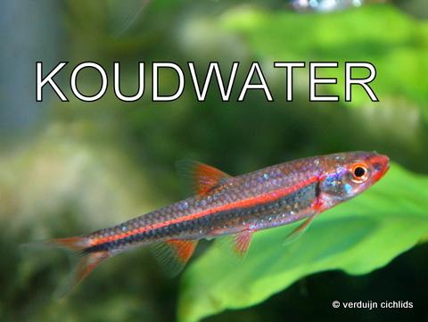 Koudwater