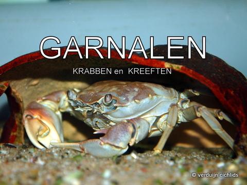 Garnalen en krabben
